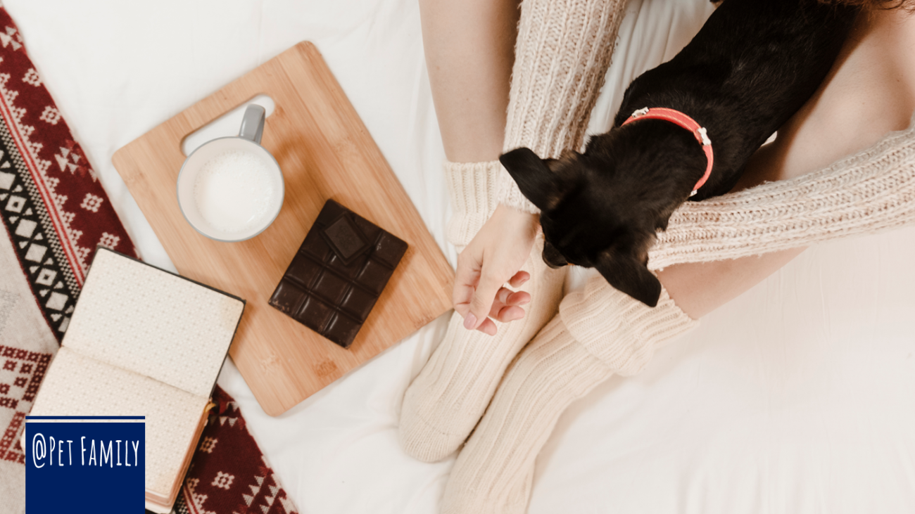 cachorro comer chocolate