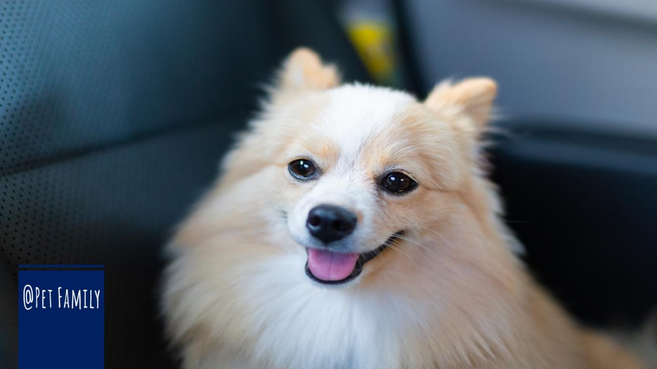 Posso levar meu Cachorro no Uber