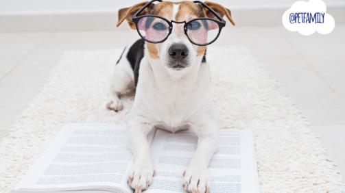 cachorros mais inteligentes do mundo
