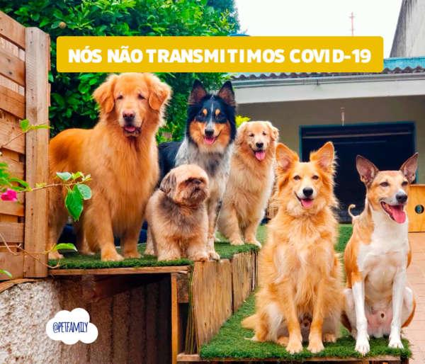 Corona Vírus: COVID-19 NÃO É TRANSMITIDO POR CACHORROS E GATOS